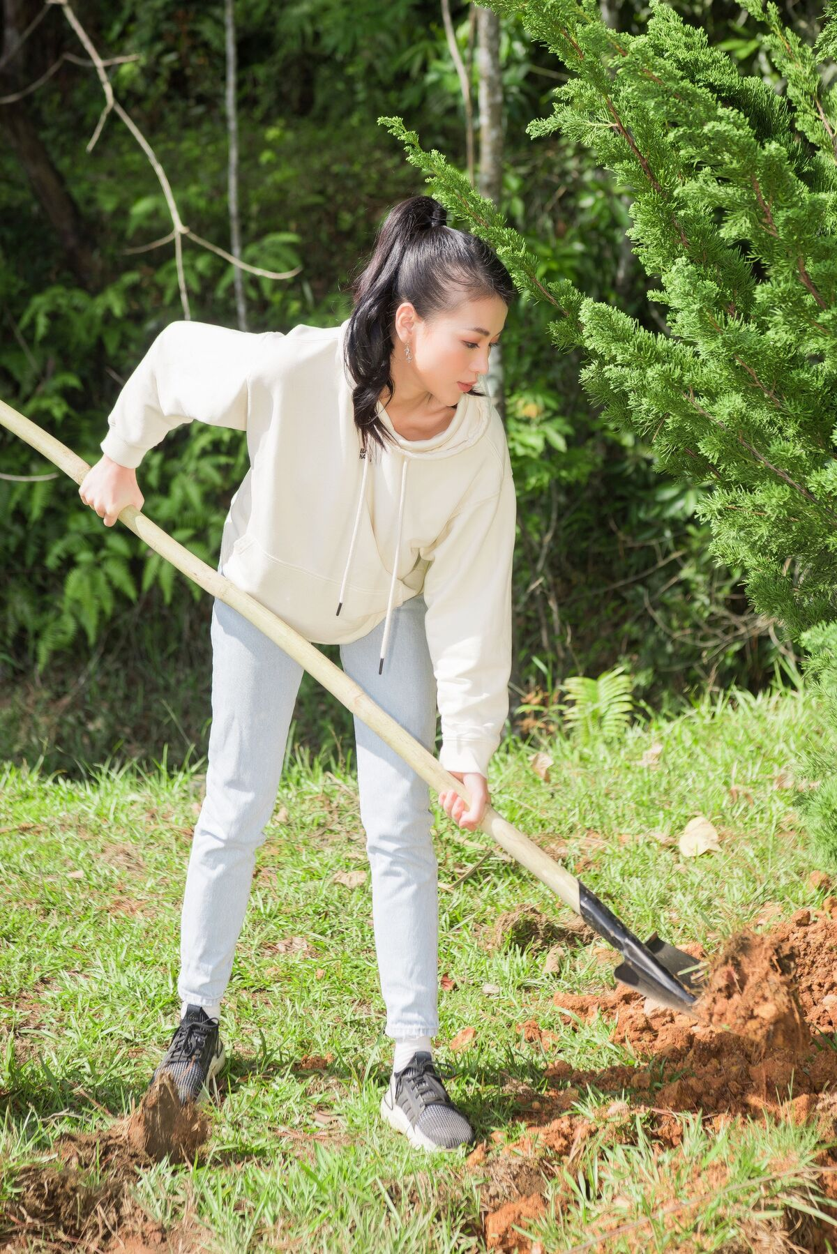 Trúc diễm diễm hương trồng cây ở lâm đồng - 5
