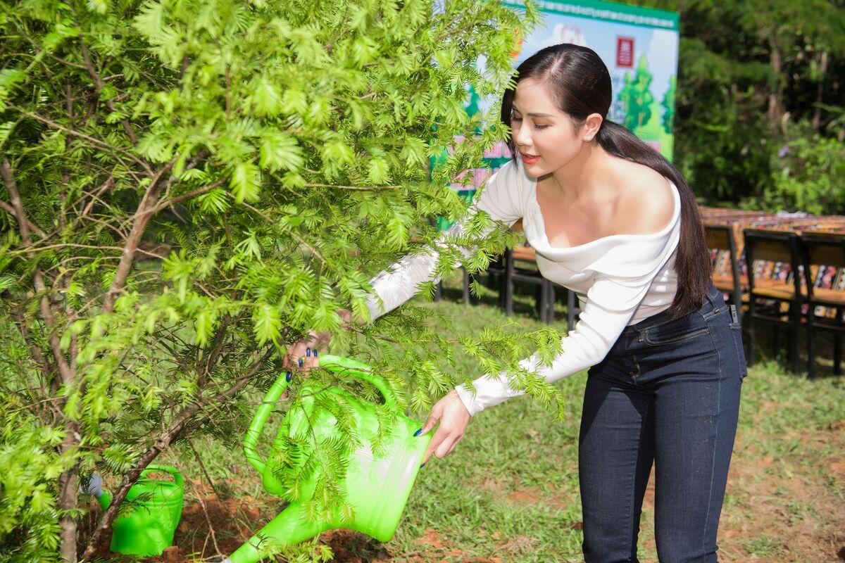 Trúc diễm diễm hương trồng cây ở lâm đồng - 7